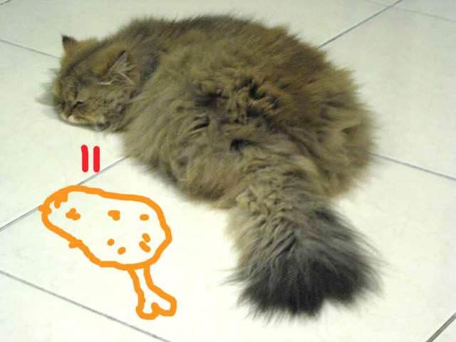 貓咪札記:香香愛睡覺