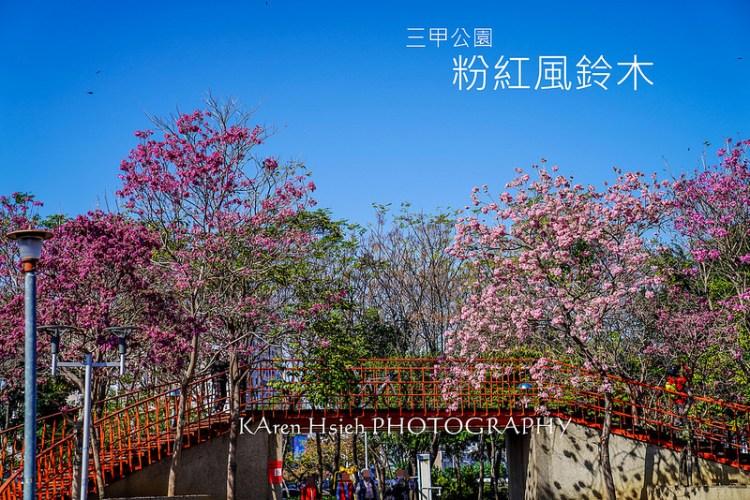 [台中。北屯區] 三甲公園 粉紅風鈴木
