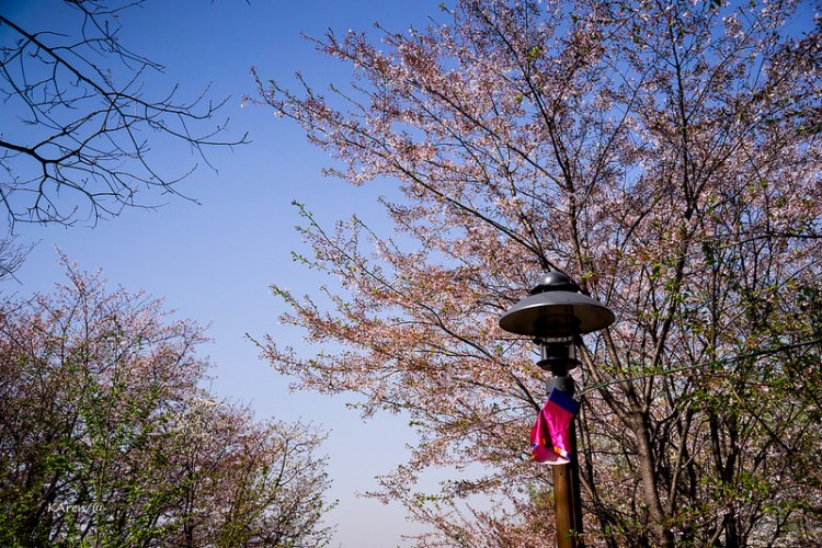 [Seoul。旅行工具] 自由行的好幫手:韓巢旅遊網 KONEST