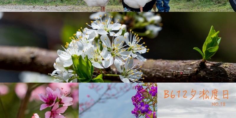 B612夕淞度日 | 超值小木屋套房賞櫻花、李花齊放,可賞雲海營區