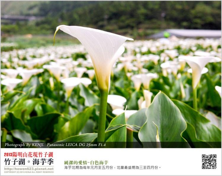 ★【北部旅遊】2013台北陽明山竹子湖海芋季
