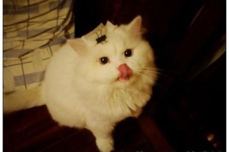 貓草大作戰