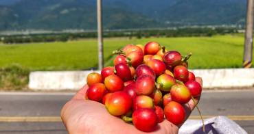 台東關山景點 跟著電光咖啡職人一起上山採豆烘豆品味人生