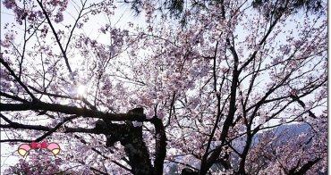嵐山公園賞櫻 》美到過分的粉嫩雪白,開滿了枝頭,讓旅人快門抓下,櫻花季京都,自由行必來(日本櫻花季花況)