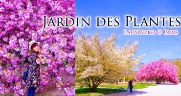 巴黎賞櫻》巴黎植物園,最放肆狂美的櫻花,滿開巴黎的夢幻春天