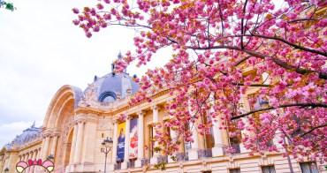 巴黎賞櫻》小皇宮Petit Palais,滿開粉嫩櫻花,空無一人的巴黎櫻花勝地