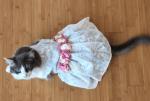 Insta :  Voici le … chat? Un homme épouse son moggie pour amasser des fonds pour des abris et des sauvetages • Long Beach Post News