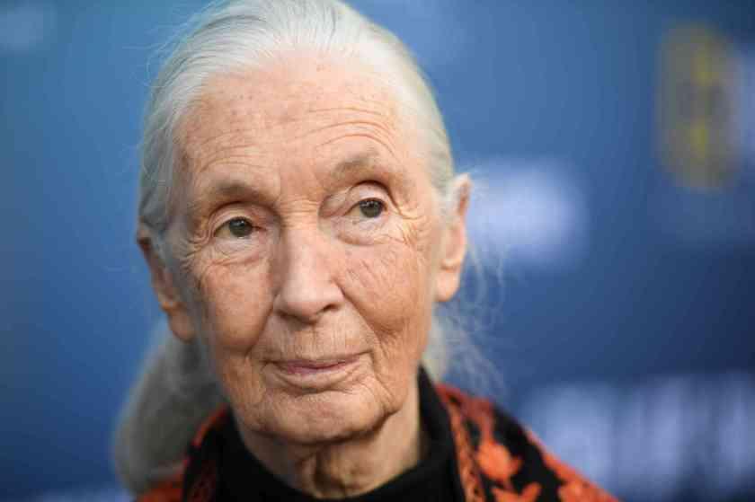 L'éthologue britannique Jane Goodall, à Los Angeles, le 10 juillet 2019.