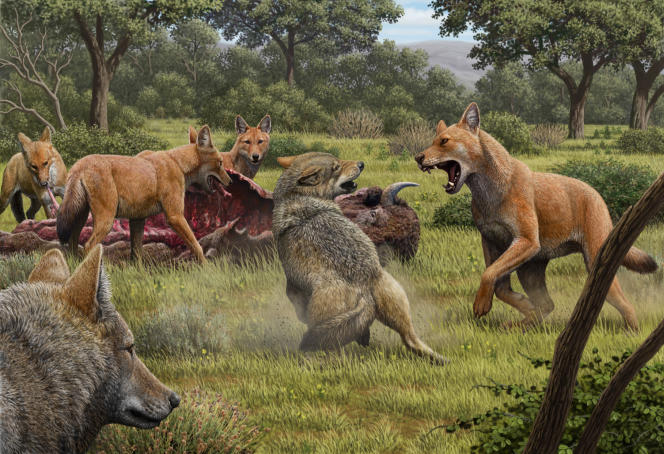 """""""Canis dirus"""", the """"terrible wolf"""" who died 12,000 years ago."""