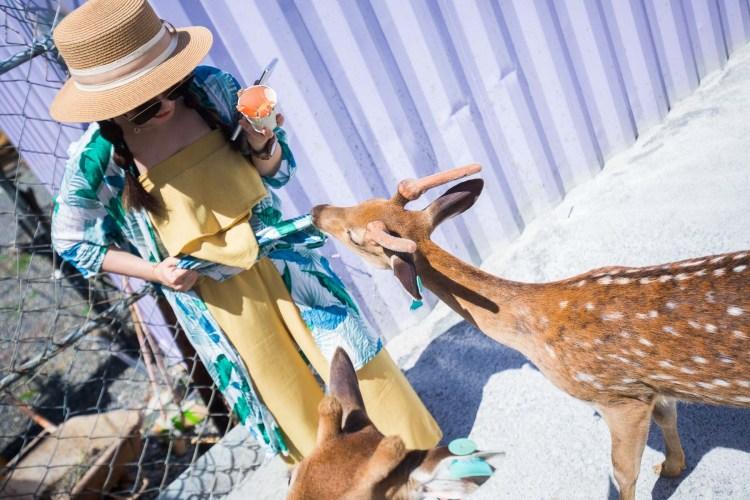 [小琉球景點]小琉球鹿粼-梅花鹿生態園區/小鹿斑比可愛指數破錶!享受被鹿鹿包圍的感覺!