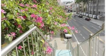 【台南市中西區-花草】大東門城附近也開花了 # 羊蹄甲 #
