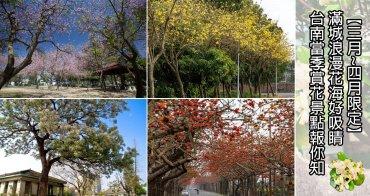 【台南景點】滿城浪漫花海好吸睛  台南當季賞花景點報你知