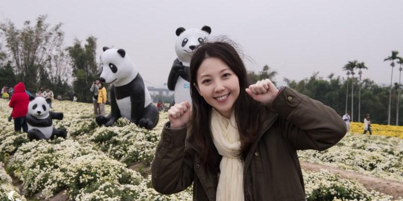 銅鑼旅遊推薦》杭菊展 - 11月雪 秋雪