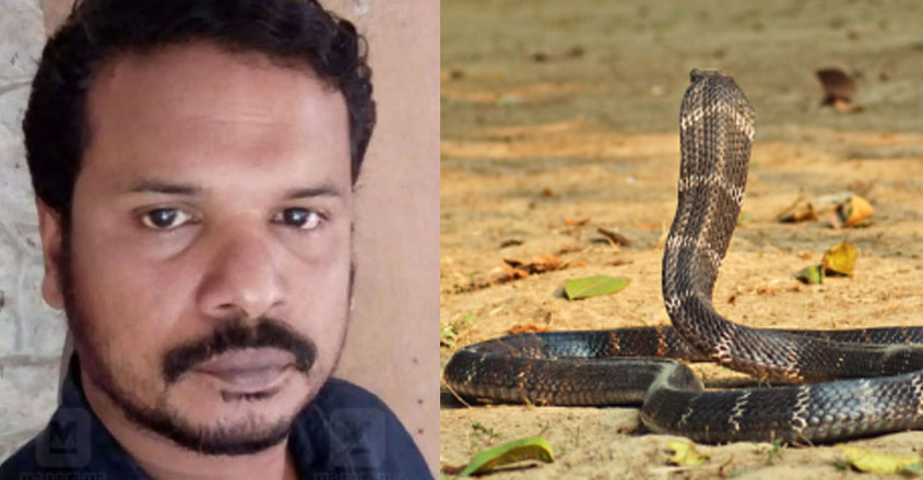 The king cobra was not released despite being bitten;  Surrendered to death by closing the door of the cage |  Trivandrum Zoo