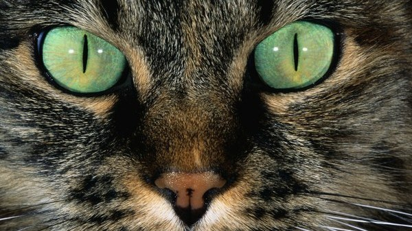Image result for Yeux de chat