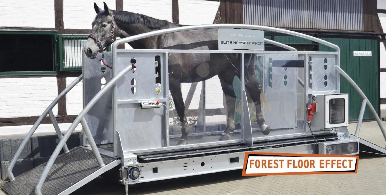 tapis roulant veterinaire pour chevaux