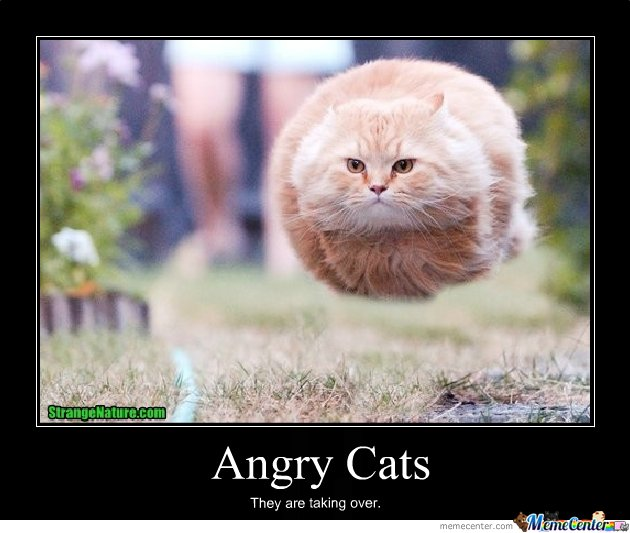 Angry Cats_o_122993?resize=630%2C533&ssl=1 mad cat face meme the best cat 2018