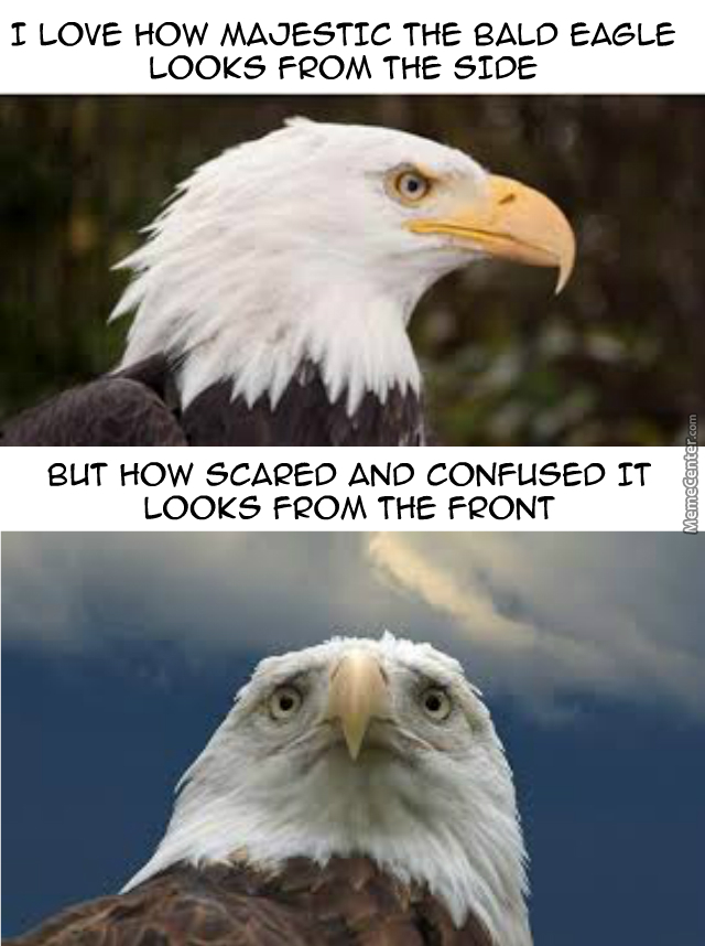 Bald Eagle By Recyclebin Meme Center