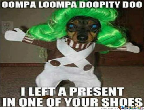 Image result for oompa loompa dog