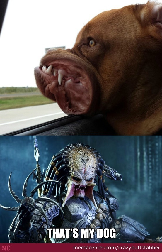 Predators Pet By Crazybuttstabber Meme Center