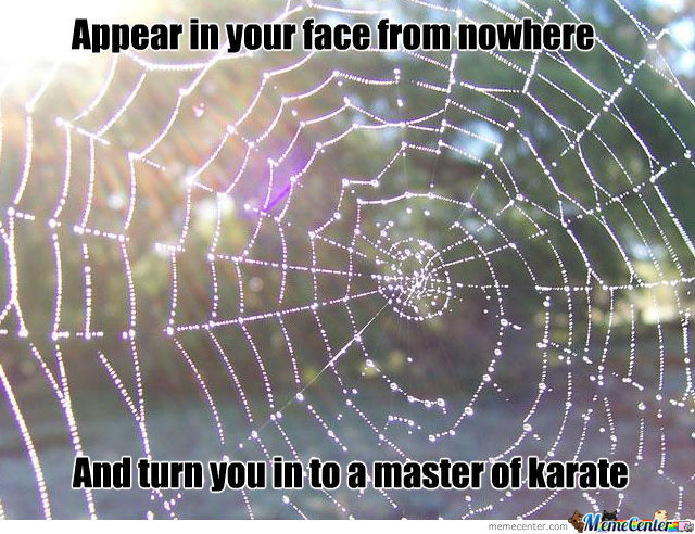 Spider Web By Tomixalex Meme Center