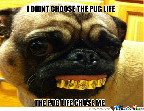 I Didnt Choose Thug Life Meme