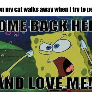 Y U No Let Me Love You Cat By Coopylv Meme Center