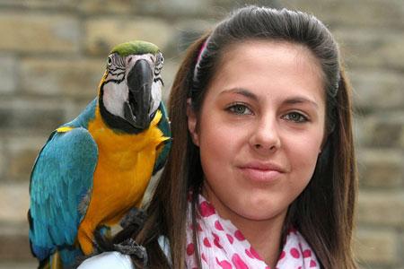 Elvis parrot