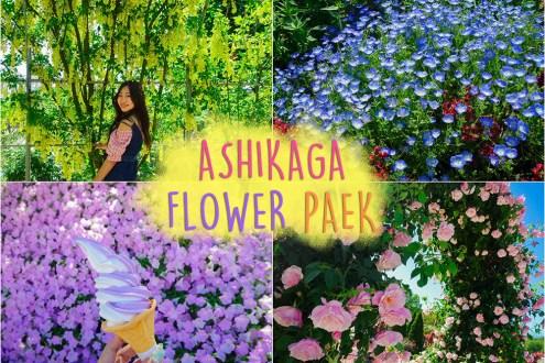 日本》東京紫藤花超夢幻!足利花卉公園一日遊 除了紫藤玫瑰也美到驚人