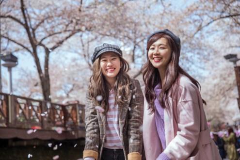 鎮海賞櫻一日遊:鎮海余佐川櫻花道+慶和火車站 經典釜山賞櫻路線