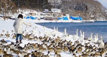 【日本東北】福島.豬苗代湖(天鏡湖):冬季必遊絕美の白鳥湖,優美天鵝號觀光船
