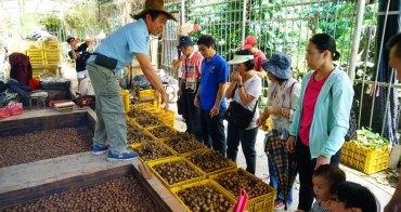 【台南東山景點】龍湖山生態農莊:咖啡香 x 龍眼香,東山175縣道咖啡公路上的柴燒龍眼干秘境。