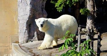 【北海道親子景點】旭山動物園:北極熊、企鵝極地動物面對面,海豹游泳超療癒