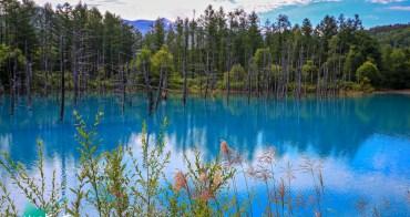 北海道美瑛景點|白金青い池:玩美瑛富良野必訪絕景,交通Mapcode,周邊景點分享