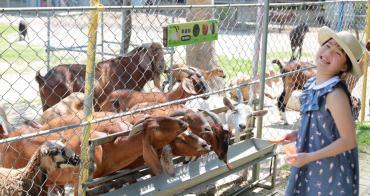 【台南親子景點】樹谷農場(附交通&票價):療癒動物園區,餵小羊喝捏捏!順遊景點推薦