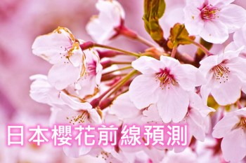 2019京都櫻花前線情報預測(1/24更新),京都櫻花季開花滿開時間
