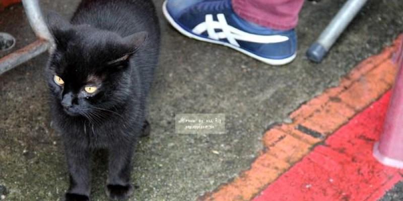 新北瑞芳景點 侯硐車站 猴硐貓村 貓奴的最愛 煤礦博物園區 平溪線 九份 願景館免費參觀