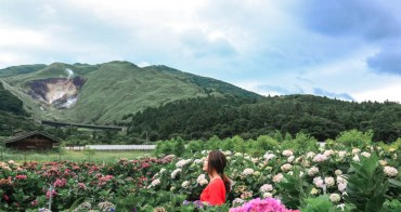 2019陽明山繡球花|財福繡球花園好仙!還拍到到小油坑(繡球花園門票花期交通)