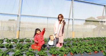 ★新竹★竹北親親果農場採草莓,青青草原放風箏