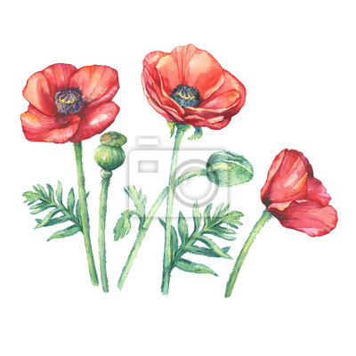Katharina Schottler Rote Mohnblumen Komposition Ii Poster