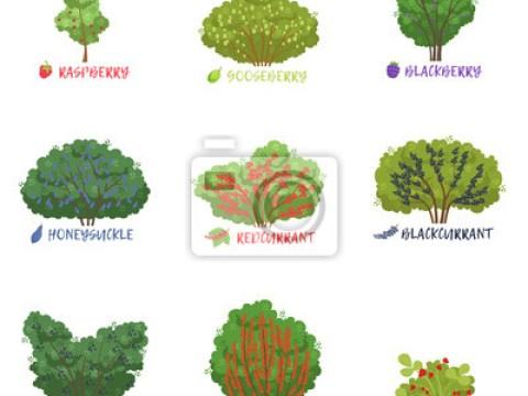 sträucher bilder mit namen fototapete: verschiedene garten beere sträucher sorten mit namen gesetzt,