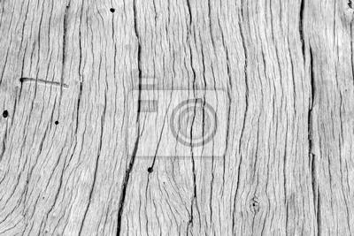 fond decran bois sec vieux tronc darbre en noir et blanc images myloview