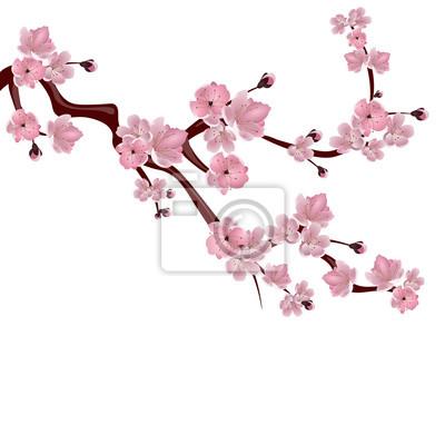 Cerisier Japonais Une Branche De Fleur De Cerisier Rose Isole Papier Peint Papiers Peints Petales De Fleurs Belle Realiste Myloview Fr