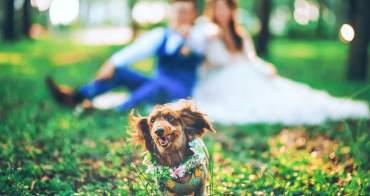 WEDDING》新人婚禮籌備時間規劃表,提早規劃不用煩惱婚事全擠一起