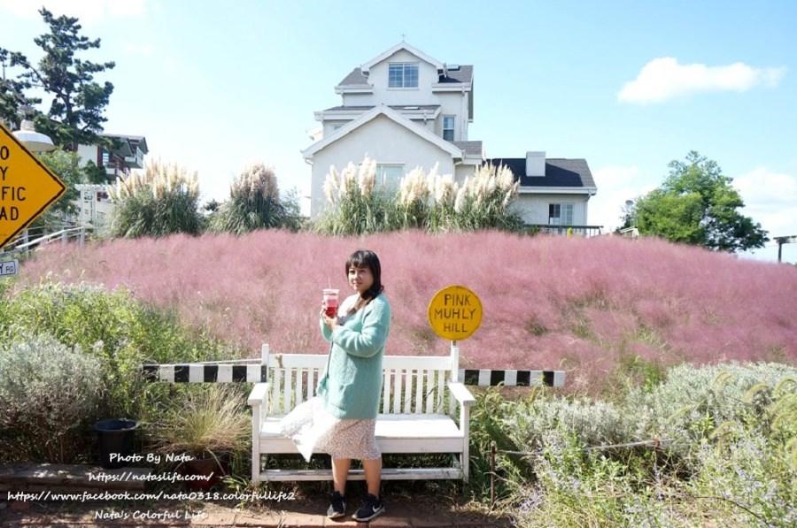 濟州島自由行│粉紅芒草景點│Kitchen OZ(키친오즈)│少女心爆發❤粉紅色花海!粉紅亂子草핑크뮬리