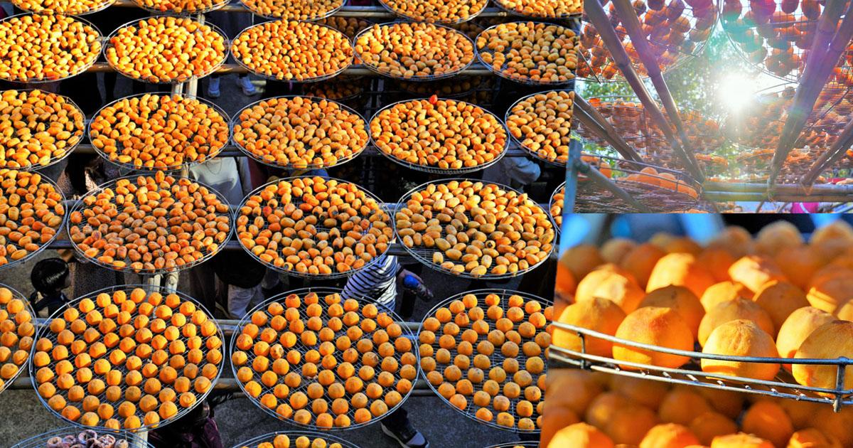 光芒閃耀討喜的九降風曬柿子,新竹必遊景點 味衛佳柿餅觀光農場|免門票
