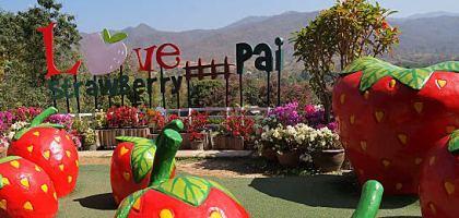 【擺鎮\拜城\pai】Love Strawberry Pai เลิฟสตรอเบอร์