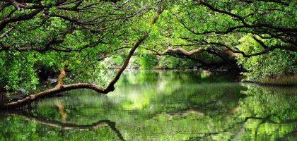 台南、安平|四草綠色隧道.綠草茵蔭貫穿暑氣