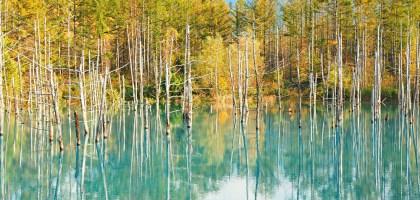 北海道、美瑛|青池.秋色打翻一池tiffany藍