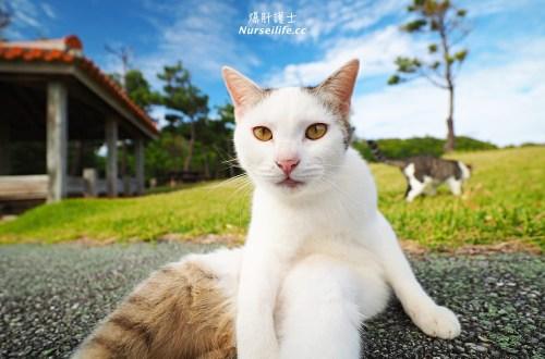 沖繩、久米島|黒石の森.貓奴秘境